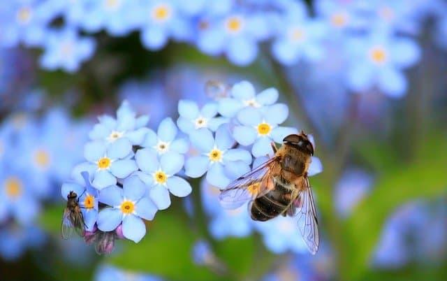 dasgupta-report-biodiversity-bumblebee-on-flower