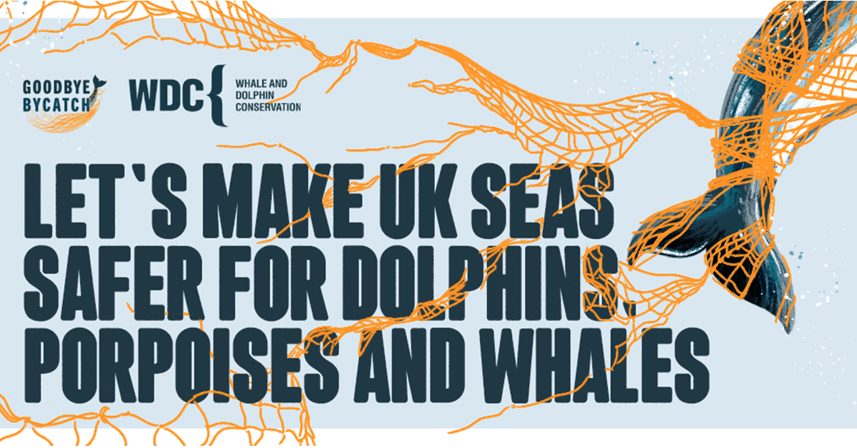 Asset reading 'Let's make UK seas safer for dolphins, porpoises and whales' in bold grey-blue font on a pale blue background. A bright orange net is tangled and draped over the letters, and the tail of a porpoise is tangled in the net. The WDC logo is in the top left corner.